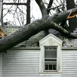 How to Prevent Trees from Damaging Your Roof This Winter