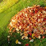 Fall Lawn Care Tips from Muth & Company