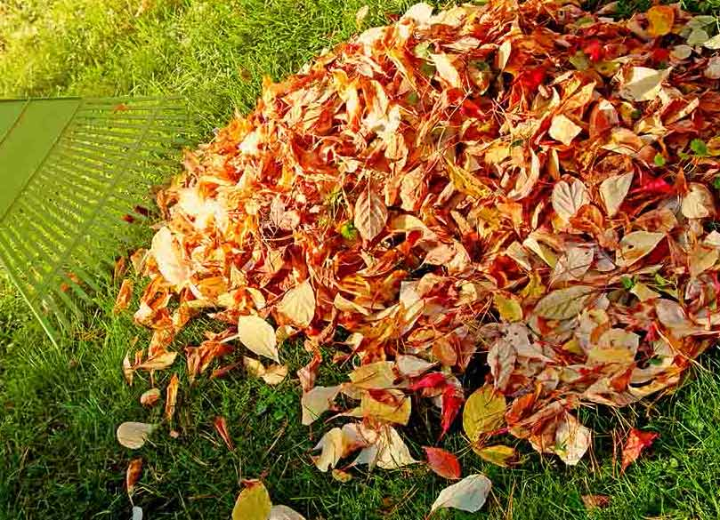 Fall lawn care tips from muth company - Autumn lawn care advice ...
