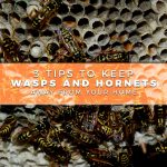 3 Tips to Keep Wasps and Hornets Away From Your Home