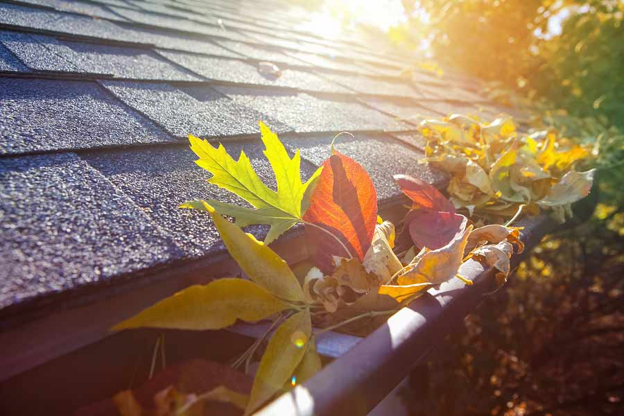 Protect Your Gutters Now with This Action Plan