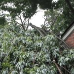 Time for Tree Removal? Signs Your Home Could Be in Danger