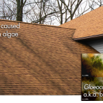StainGuard Plus Shingles With Exclusive GAF Time-Release Technology.
